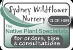 Wildflower Wholesale Nursery   Indigenous Nursery Wholesale Bulbs