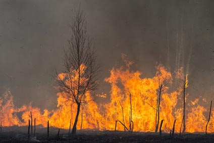 Bush fire attack and building product compliance