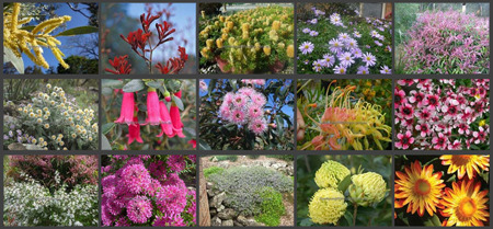 Various Australian flowering plants