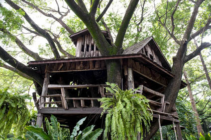 Building A Tree House In Australia